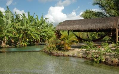 Tao Paradise Brasil